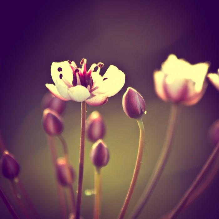 Фото цветы в вазе на зеленом фоне 72