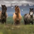 Лошади - Horses