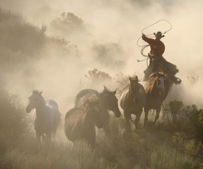 istock 000002358858large 700x582 Всадники на лошадях   Riders on horseback