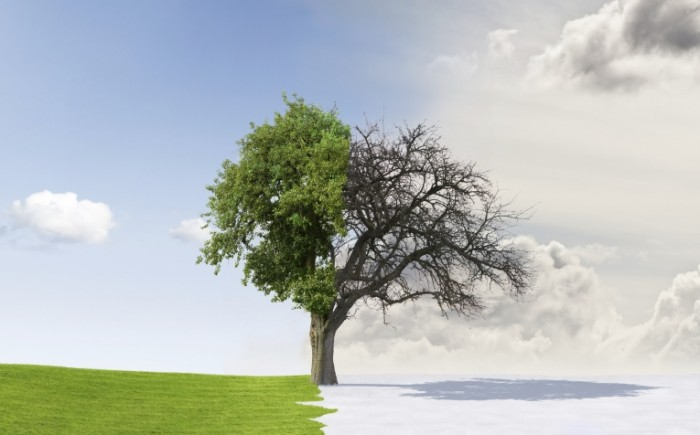istock 000012511843large 700x435 Дерево   Tree