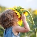 Девочка с подсолнухом - Girl with sunflower