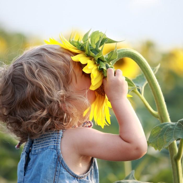 nature child 700x700 Девочка с подсолнухом   Girl with sunflower
