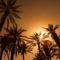 Пальмы - Palma