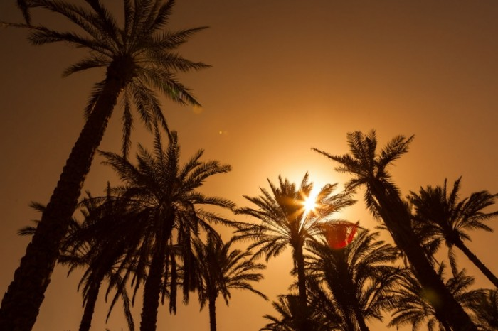 shutterstock 123498157 700x466 Пальмы   Palma