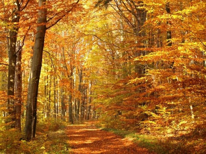 shutterstock 1327499271 700x524 Осенний парк   Autumn Park