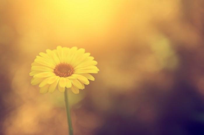 shutterstock 144964114 700x466 Цветок   Flower