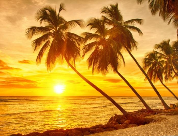 shutterstock 204468847 700x537 Пальмы   Palma