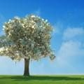 Дерево с долларами - Tree with dollars