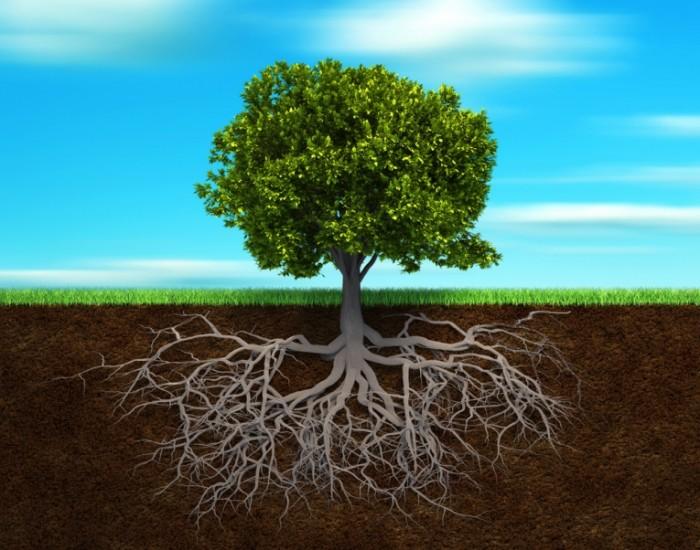 shutterstock 63001576 700x550 Дерево   Tree