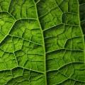 Текстура листка - Texture sheet