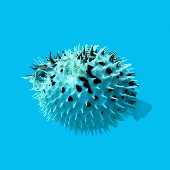 shutterstock 95117263 700x700 Рыба   Fish