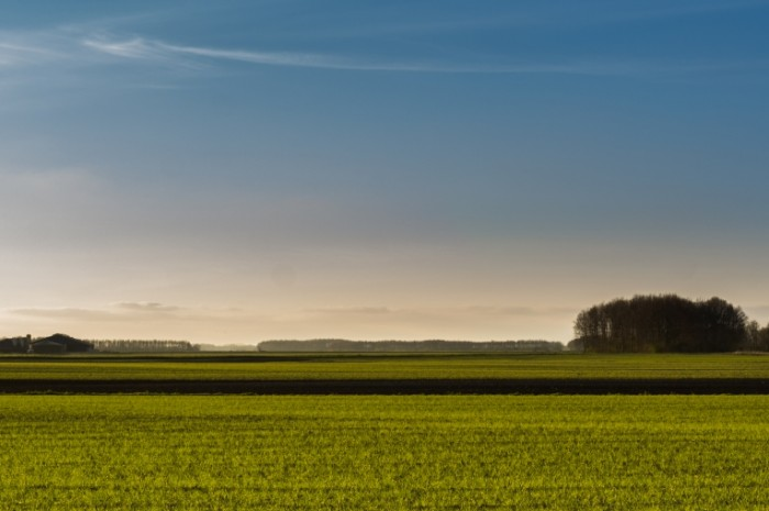 Typical dutch landscape free license CC0 700x465 Зеленый ландшафт   Green landscape
