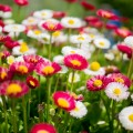 Розовые и белые цветы - Pink and white flowers