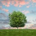 Дерево и цветное небо - Tree and colorful sky