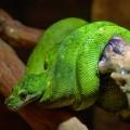 Змея и дерево - Snake and tree