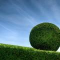 Круглый куст - Round bush