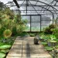 Зеленый сад - Green garden