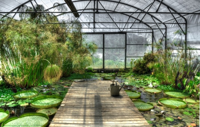 lotus greenhouse free license CC0 700x446 Зеленый сад   Green garden