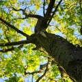 Дерево летом - Tree in the summer