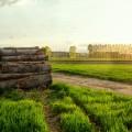Дрова в поле - A Woodpile In The Field