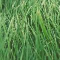 Зеленая трава - Green grass