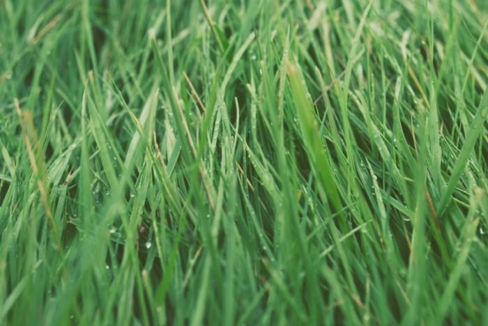 JjdWbOCTlemWMuvC0BeF DSC 0867edit 700x468 Зеленая трава   Green grass