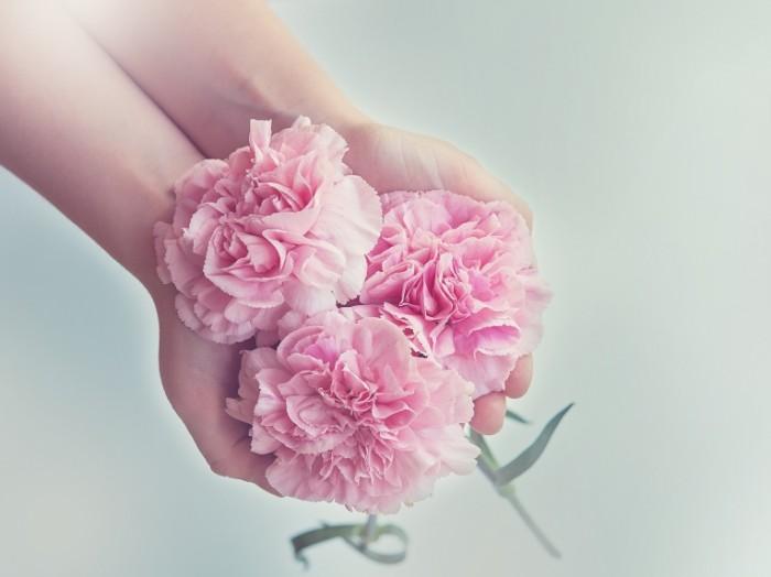 cloves 1367675 700x524 Pink flowers   розовые цветы