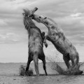 Horses on the lake - Лошади на озере