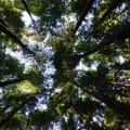 Хвойный лес - Coniferous forest