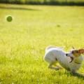 Dog and ball - Собака с мячем
