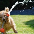 Dog and water hose - Собака и шланг с водой