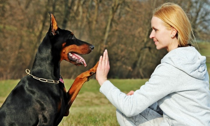 friendship 13939583 700x421 Girl with dog   Девушка с собакой