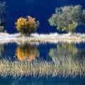 Деревья у реки - Trees by the river