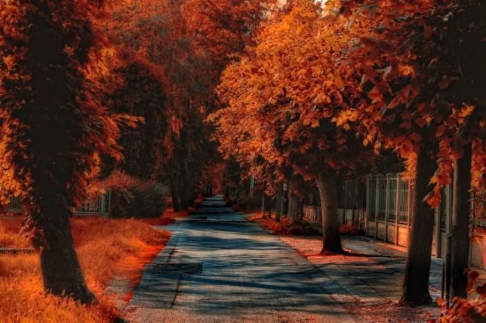 bbf63ae37ae9b8a 700x466 Осень   Autumn