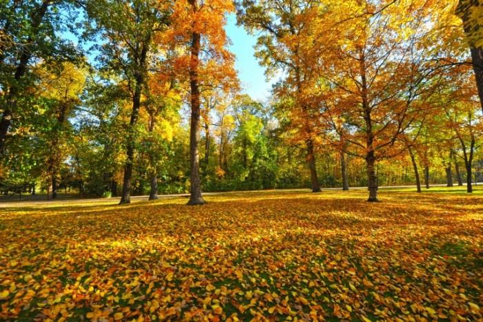 c460b9fea0f1572 700x466 Осенний лес   Autumn in the forest
