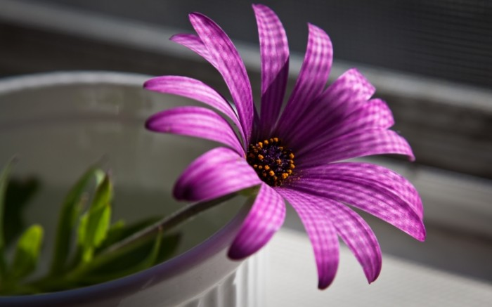 purpurnyy cvetok makro f592109 700x437 Цветок   Flower