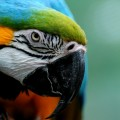 Попугай - Parrot