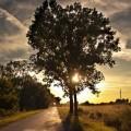Tree - Дерево