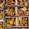 Грибы в коробках - Mushrooms in boxes