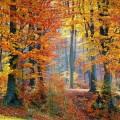 Осенний лес - Autumn forest