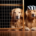 Собака в шапке - Dog in the hat