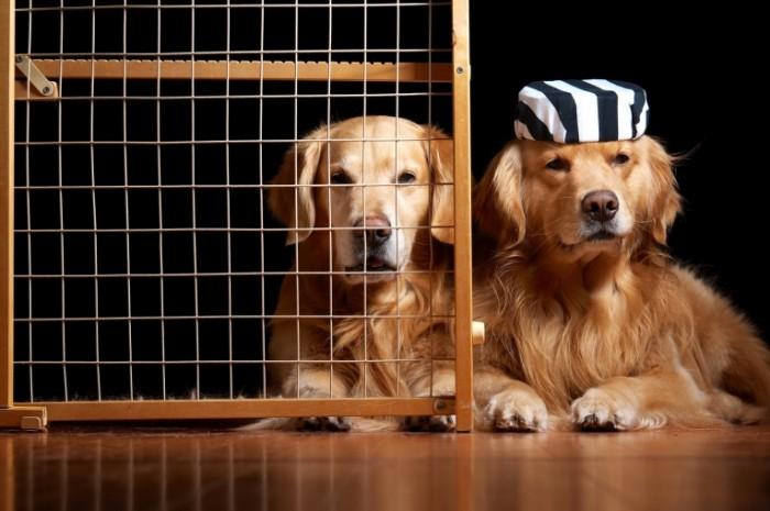 14788715585825ca06598d86.48746470 700x465 Собака в шапке   Dog in the hat