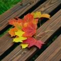 Осенние листья на скамье - Autumn leaves on the bench