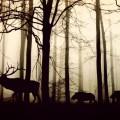 Дикие животные в лесу - Wild animals in forest