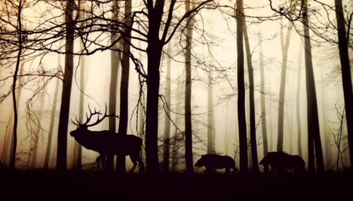 forest 1818690 700x398 Дикие животные в лесу   Wild animals in forest