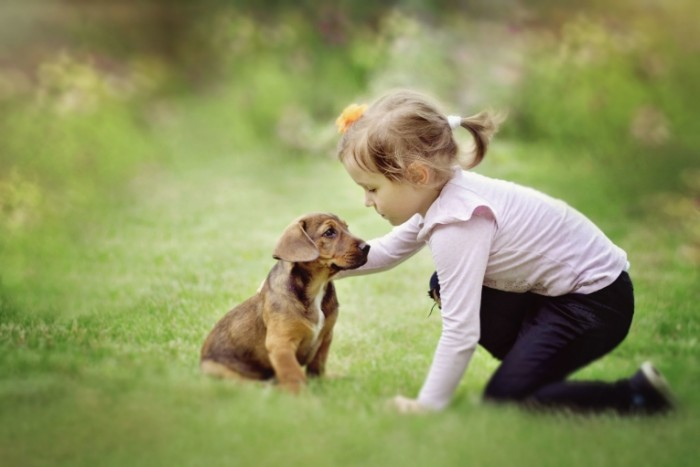 priroda sobaka devocka 700x467 Девочка с щенком   Girl with puppy