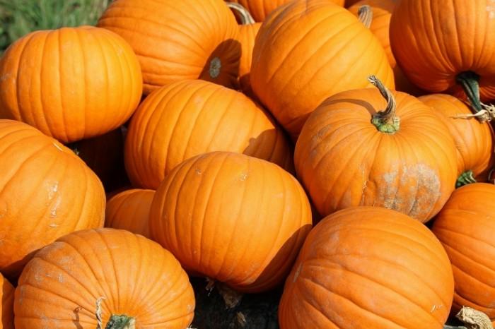 pumpkins 457716 700x466 Тыква   Pumpkin