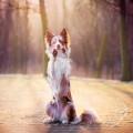 Веселая собака - Funny dog