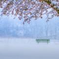 Снегопад - Snowfall