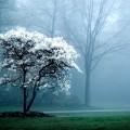 Красивое дерево - Beautiful tree